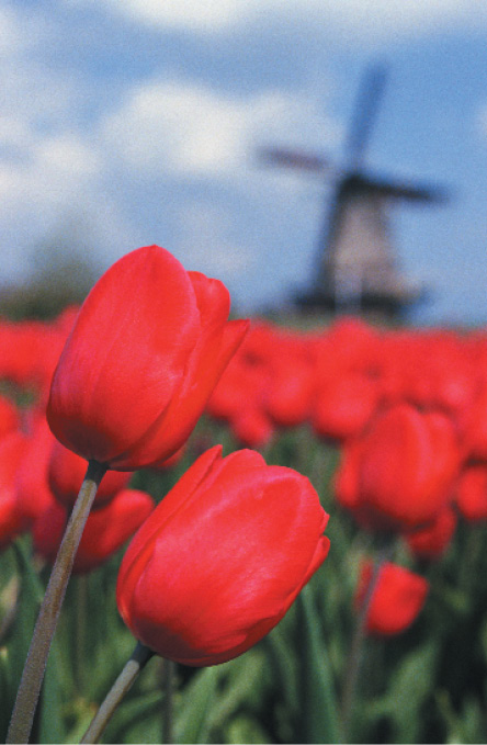 Tulips & Windmills River Cruise March 2018
